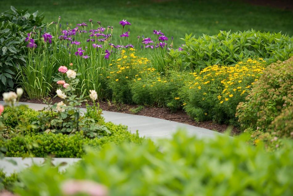 D & A Dunlevy Flower Garden